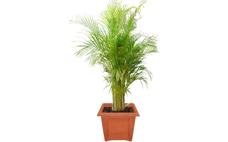Indoor & outdoor plant suppliers Dubai | Uae