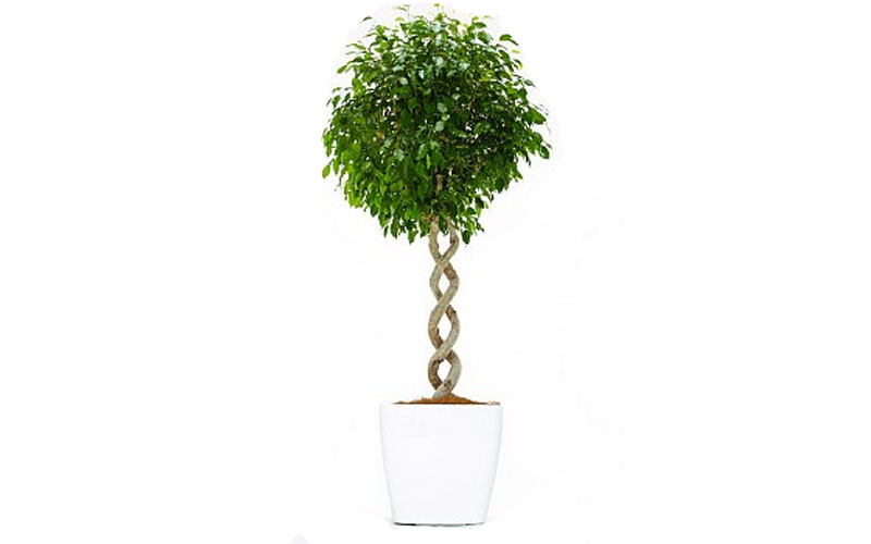 indoor plant suppliers UAE