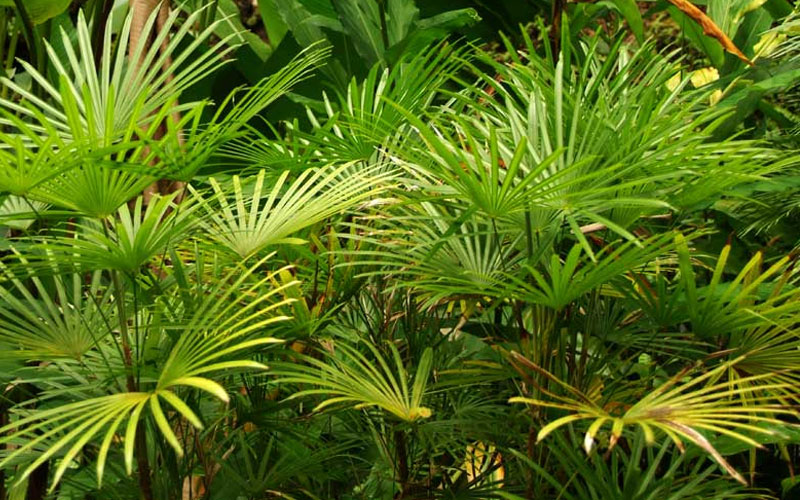 Palm Tree Landscaping services in Dubai