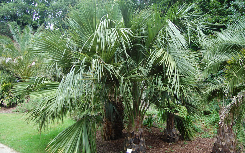 Palm tree landscaping company in UAE