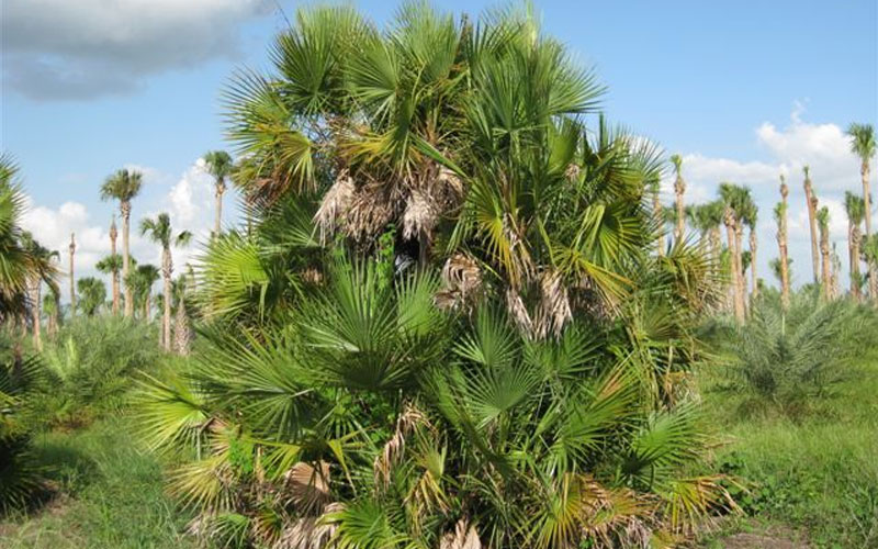Palm tree landscaping company in dubai
