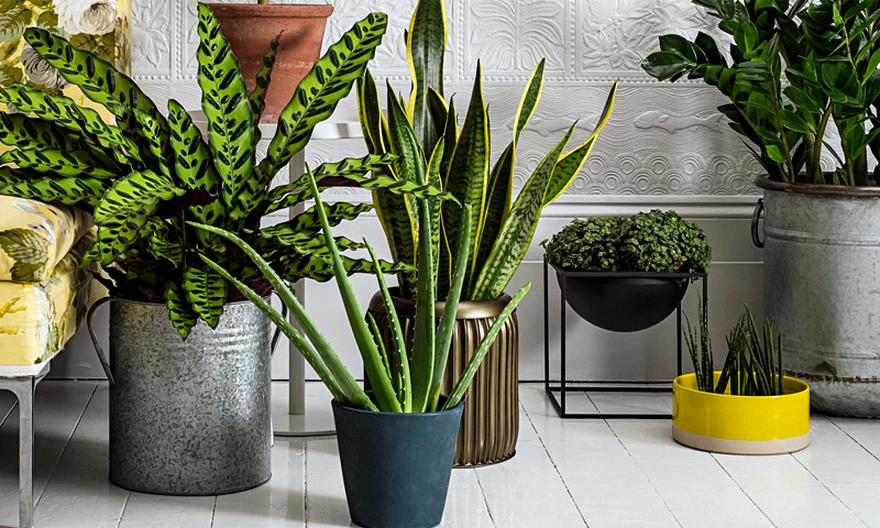 indoor plant suppliers dubai