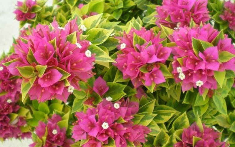 shrubs landscaping services in Dubai