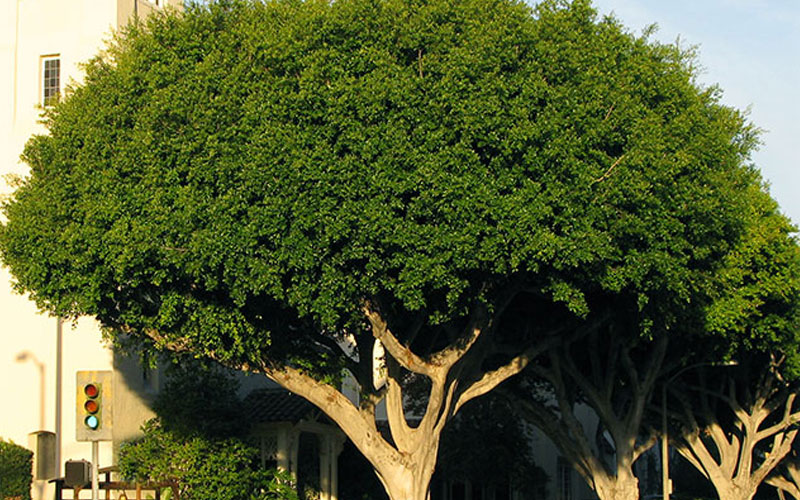 tree landscaping services in Dubai